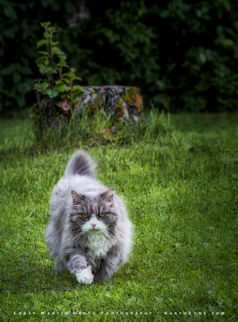 Conny the cat, age 17